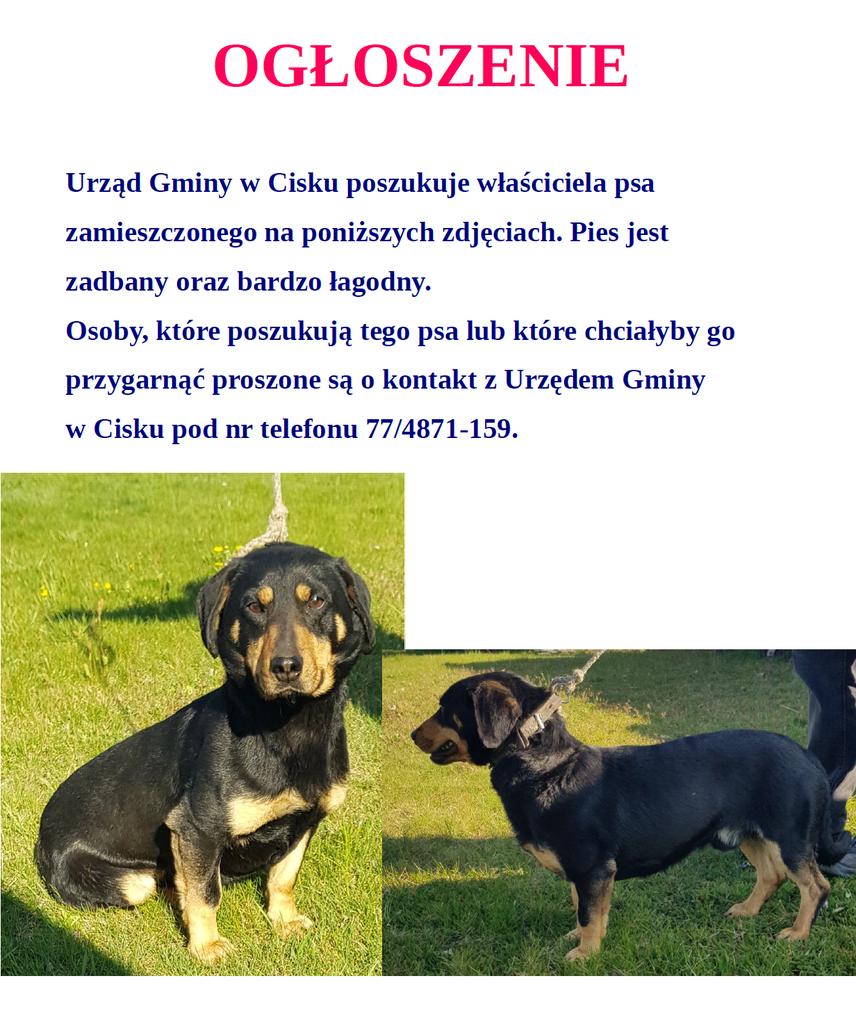 Ogłoszenie_pies_04.2020.png