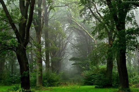 drzewa_krzewy.jpeg