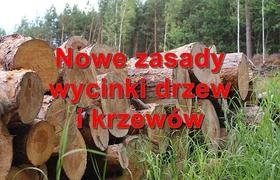 wycinka_drzew.jpeg