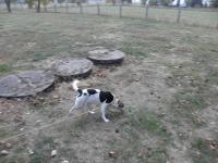 Galeria Pies szuka swego Pana