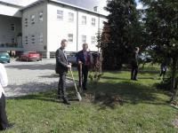 Galeria 15 lat współpracy - drzewko prze UG Cisek